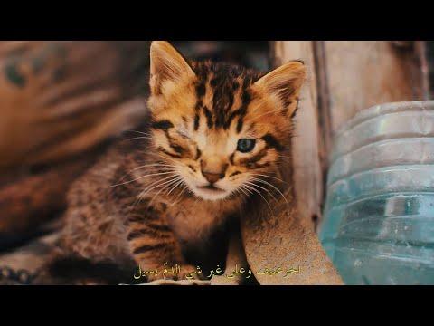 Clip de Stratégie de Paix, Les chats d'Halfaouine